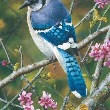 Flash of Sapphire - Blue Jay