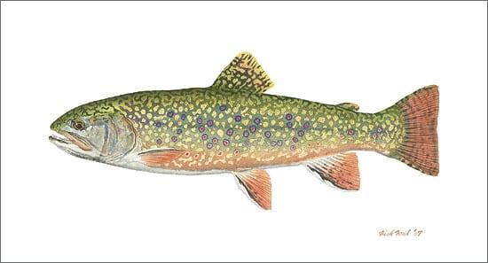 Pennsylvania Brook Trout