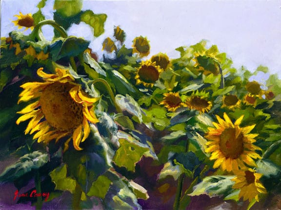 Sunflowers Near Cortona