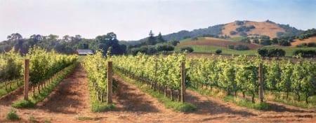 Vineyard Before the Harvest