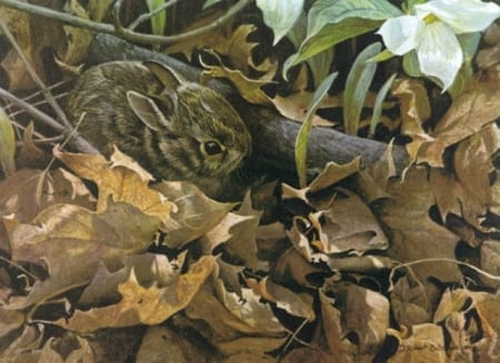 Among the Leaves-Cottontail