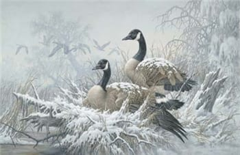 April Snow - Canadian Geese