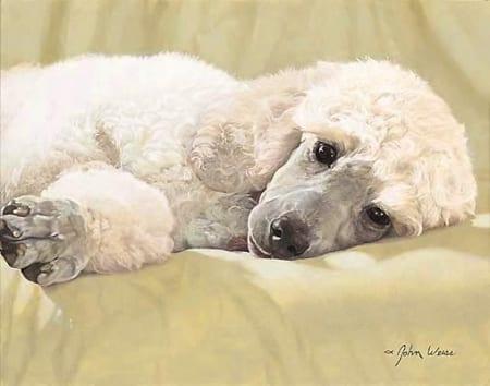 Best Loved Breeds - White Standard Poodle