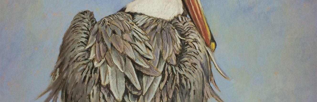Brown Pelican_JudyFairley16x20