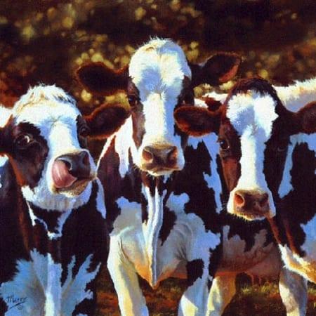 Dairy Queens - Bonnie Marris
