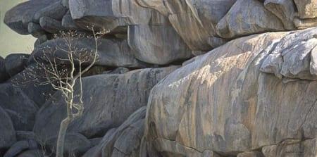 Kopje Look-Out - Leopard