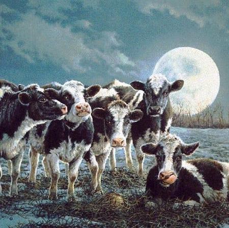 Moonshine - Bonnie Marris