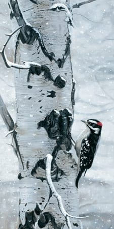 Touch of Red - Downy Woodpecker