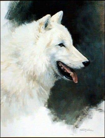 White Wolf Study - Mort Solberg