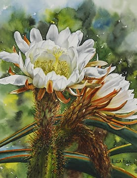 Cereus, original watercolor by Wenaha Gallery guest artist Lisa Hill