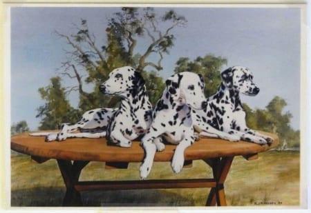 Dalmatian Picnic - Randy Klassen
