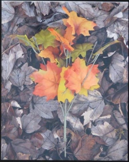 Orange and Green Leaves - Gary Wessels-Galbreath