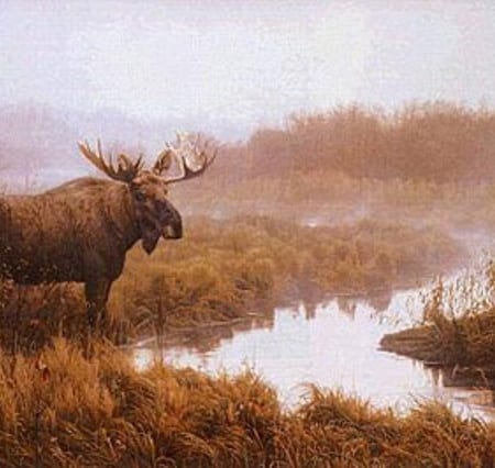 End of Autumn - Moose