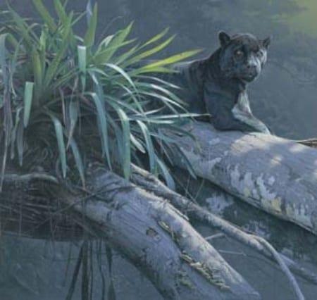 Apparition of the Amazon - Daniel Smith