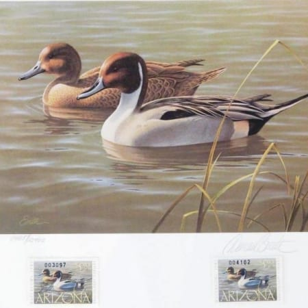 1987 Arizona Waterfowl Stamp Pintails - Daniel Smith