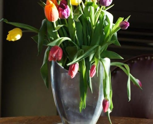 Tulips, fine art photography by Patricia Fleming