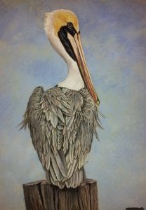Brown Pelican, scratchboard art by Judy Fairley