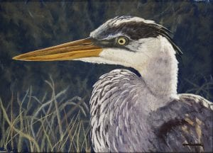Great Blue Heron, scratchboard art by Judy Fairley