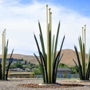 Desert Grass, public art piece in Richland, WA, by Joseph Rastovich