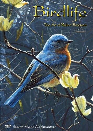 Birdlife-The Art of Robert Bateman