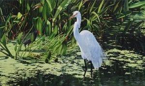 stalker crane bird acrylic painting david schatz