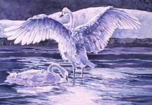 swan tundra watercolor dream bird painting barbara janusz
