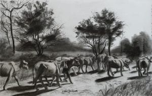 Colombia cows walking country road charcoal drawing