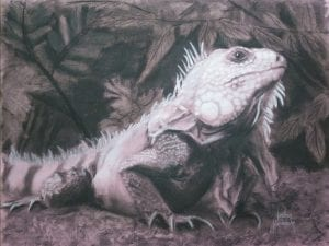 Iguana charcoal drawing colombia medellin city park