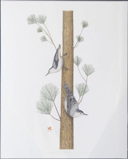 White Breasted Nuthatches - Hiroko Cannon
