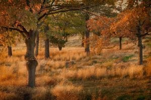 evening sun forest landscape photography barb thrall