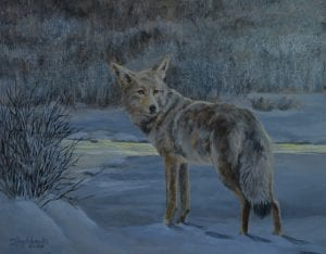 coyote wildlife animal painting art debbie hughbanks