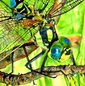 dragonfly insect watercolor bright color painting suzi vitulli richland