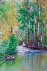 forest reflections country landscape deborah bruce retired florist