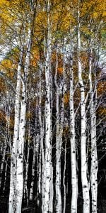 autumn gold trees woods forest digital art gay waldman spokane