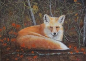 fox curled wildlife animal rislove art landscape