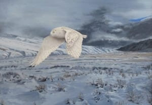 storm landscape snowy white owl flying wildlife keith rislove