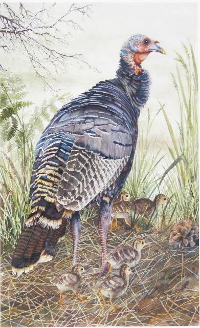 Hen Turkey with Chicks