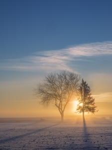 morning landscape eastern washington tree photo john clement