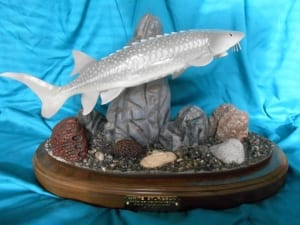 white sturgeon fish wooden sculpture tom schirm