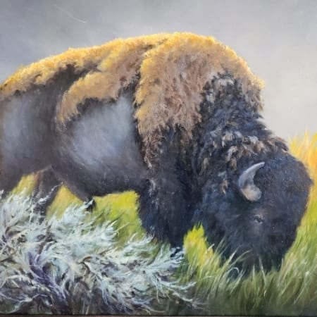 Molting Buffalo