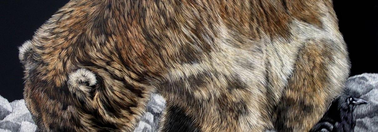 bear bird wildlife scratchboard aniimals art sandra haynes