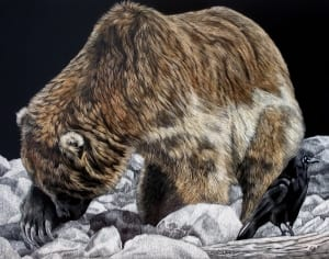 bear bird wildlife scratchboard aniimals art sandra haynes