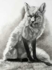 foxy lady graphite duralar wildlife animal fox sandra haynes
