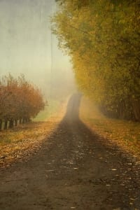 foggy country road clouds autumn moody nancy richter
