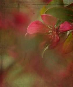 pink flower floral macro photography nancy richter