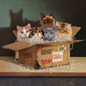 cats felines animals box braldt bralds