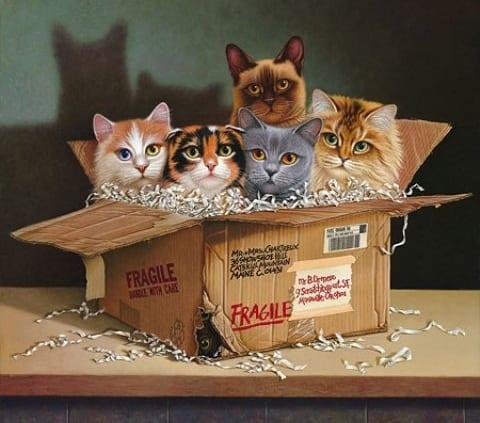 cats felines animals box braldt bralds