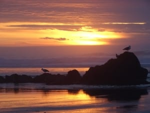 seagulls birds coast beach ocean sunset doug paulson photography
