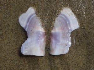 shell butterfly beach coast sand doug paulson details photograph