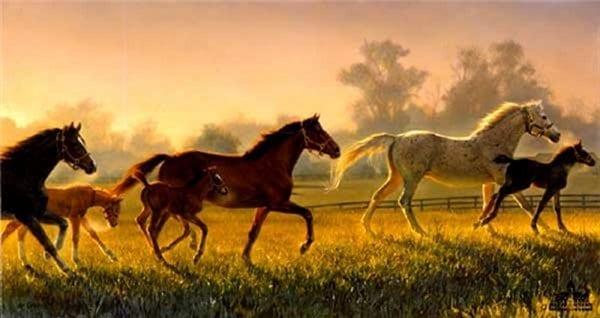 horses animals foal mares running nancy glazier
